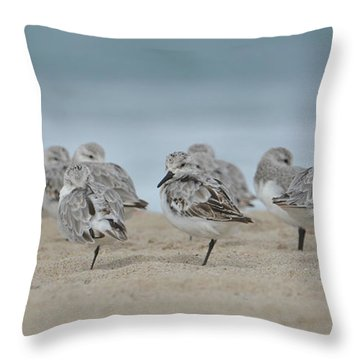 Plover Colony Throw Pillow
