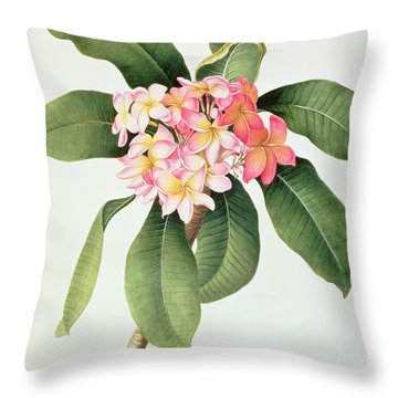 Plumeria Throw Pillow by Georg Dionysius Ehret