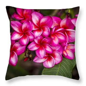 Plumeria Profusion Throw Pillow