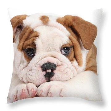 Po-faced Bulldog Throw Pillow