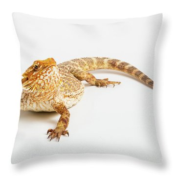Pogona Isolated Throw Pillow