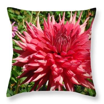 Pointed Pink Dahlia  Throw Pillow