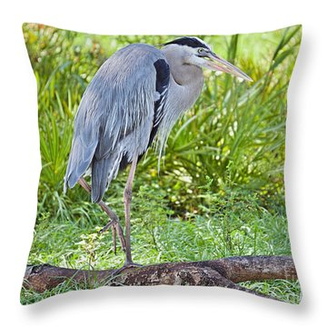 Poised And Focused Throw Pillow