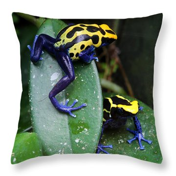 Poisonous Dart Frogs Throw Pillow