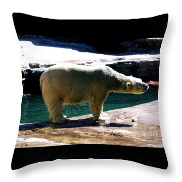 Throw Pillow featuring the photograph Polar Bear 3 by Rose Santuci-Sofranko