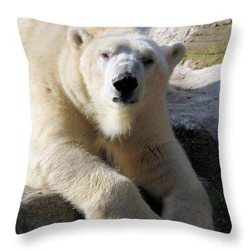 Polar Bear Throw Pillow by Karol Livote