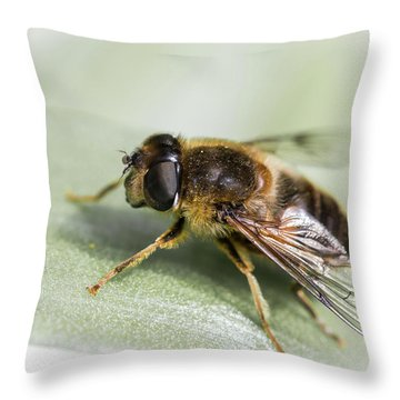 Pollen Dusted Throw Pillow