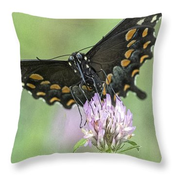 Throw Pillow featuring the photograph Pollinating #2 by Wade Aiken