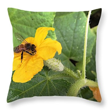 Pollinating Cucumbers 2  Throw Pillow