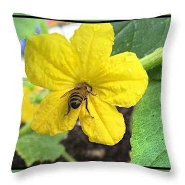 Pollinating Cucumber 1 Throw Pillow