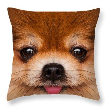 Pomeranian. Throw Pillow by Parawat Isarangura Na Ayudhaya
