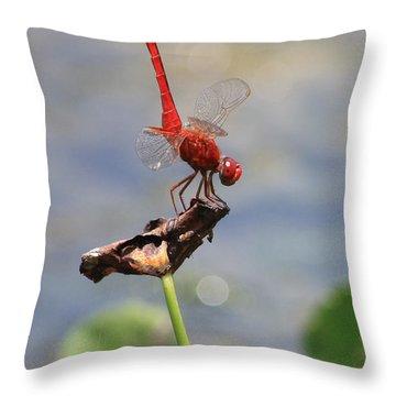 Pond Ballerina Throw Pillow by Carol Groenen