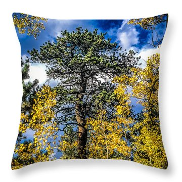 Ponderosa  Tree In The Aspens Of Fall Colorado Throw Pillow