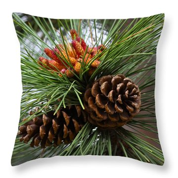Ponderosa Pine Cones Throw Pillow
