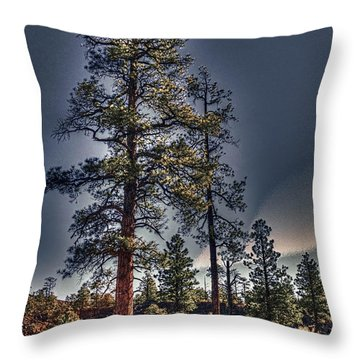 Ponderosa Pines At The Bonito Lava Flow Throw Pillow