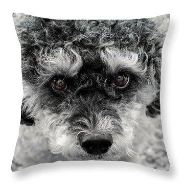 Poodle Eyes Throw Pillow