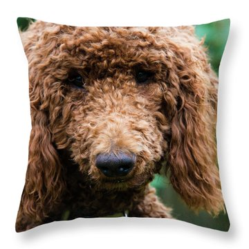 Poodle Pup Throw Pillow
