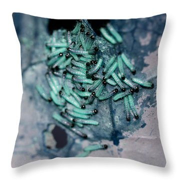 Throw Pillow featuring the photograph Pop Macro No. 1 by Laura Melis