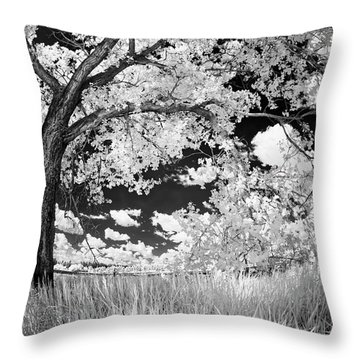 Poplar On The Edge Of A Field Throw Pillow by Dan Jurak