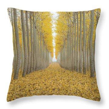 Poplar Tree Farm One Foggy Morning In Fall Season Throw Pillow