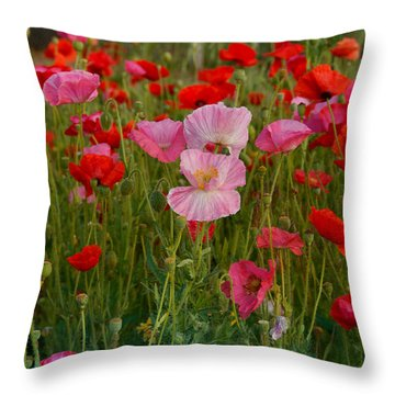 Poppies Galore Throw Pillow by Carolyn Dalessandro
