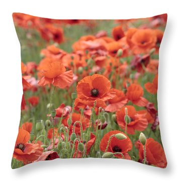 Poppies Throw Pillow by Phil Crean