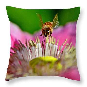 Poppy And A Bee 006 Throw Pillow by George Bostian