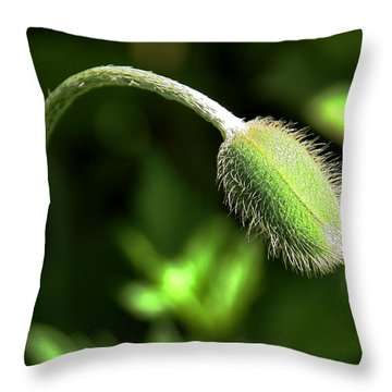 Poppy Bud In Sunlight Throw Pillow