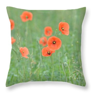 Poppy Field Throw Pillow by Alan Lenk