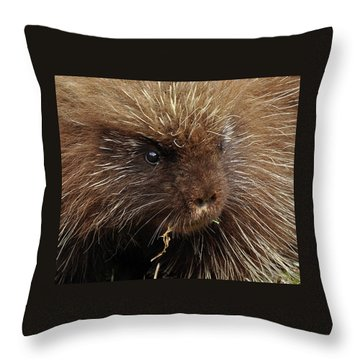 Throw Pillow featuring the photograph Porcupine by Glenn Gordon