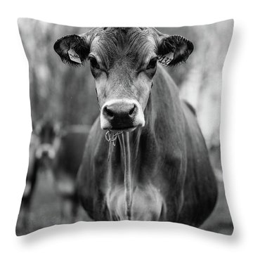 Portrait Of A Dairy Cow In The Rain Stowe Vermont Throw Pillow