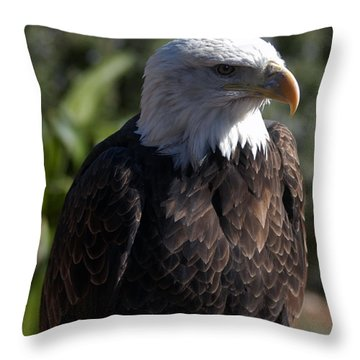 Portrait Bald Eagle  Throw Pillow