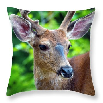 Portrait In Velvet Throw Pillow