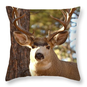 Portrait Of A 15-point Buck Throw Pillow
