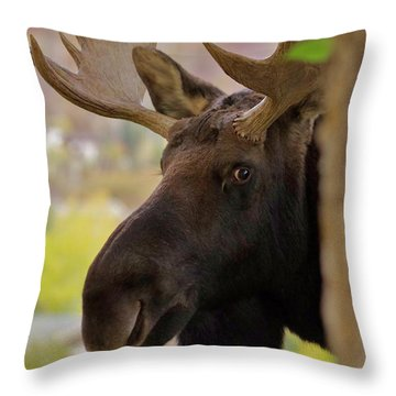 Portrait Of A Bull Moose Throw Pillow by Matt Helm