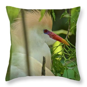 Portrait Of A Cattle Egret Throw Pillow