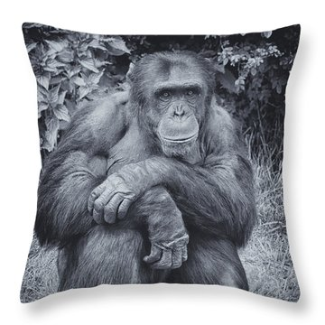 Portrait Of A Chimp Throw Pillow