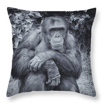Portrait Of A Chimp Throw Pillow