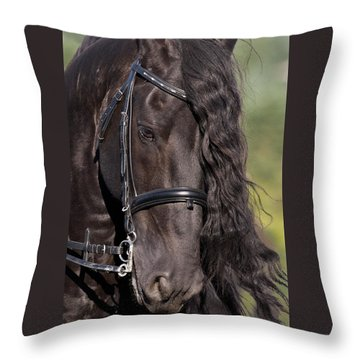Throw Pillow featuring the photograph Portrait Of A Friesian D6438 by Wes and Dotty Weber