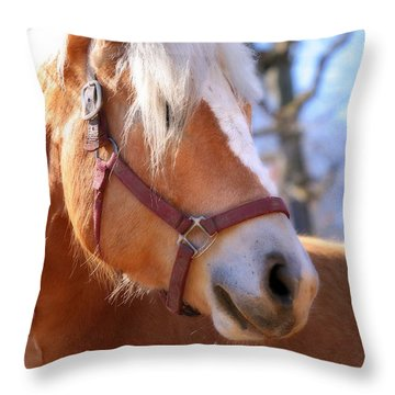 Throw Pillow featuring the photograph Portrait Of A Haflinger - Niko by Angela Rath