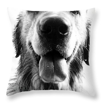 Portrait Of A Happy Dog Throw Pillow