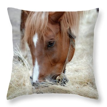 Portrait Of A Horse Throw Pillow by Brenda Bostic