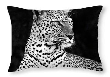 Portrait Of A Leopard Throw Pillow by Richard Garvey-Williams