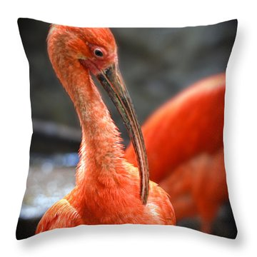Portrait Of A Scarlet Ibis Bird  Throw Pillow