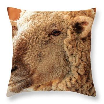 Portrait Of A Southdown Sheep Throw Pillow