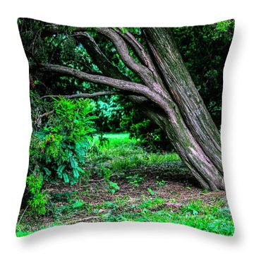 Throw Pillow featuring the photograph Portrait Of A Tree by Madeline Ellis