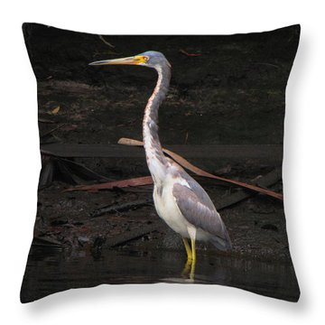 Throw Pillow featuring the photograph Portrait Of A Tri-colored Heron by Barbara Bowen