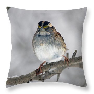 Portrait Of A White-throated Sparrow Throw Pillow by Timothy McIntyre