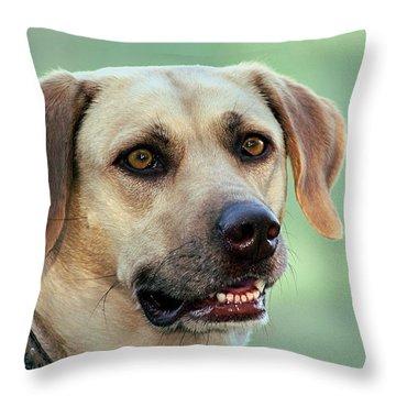 Portrait Of A Yellow Labrador Retriever Throw Pillow