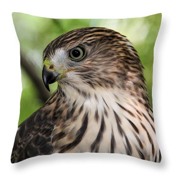 Portrait Of A Young Cooper's Hawk Throw Pillow